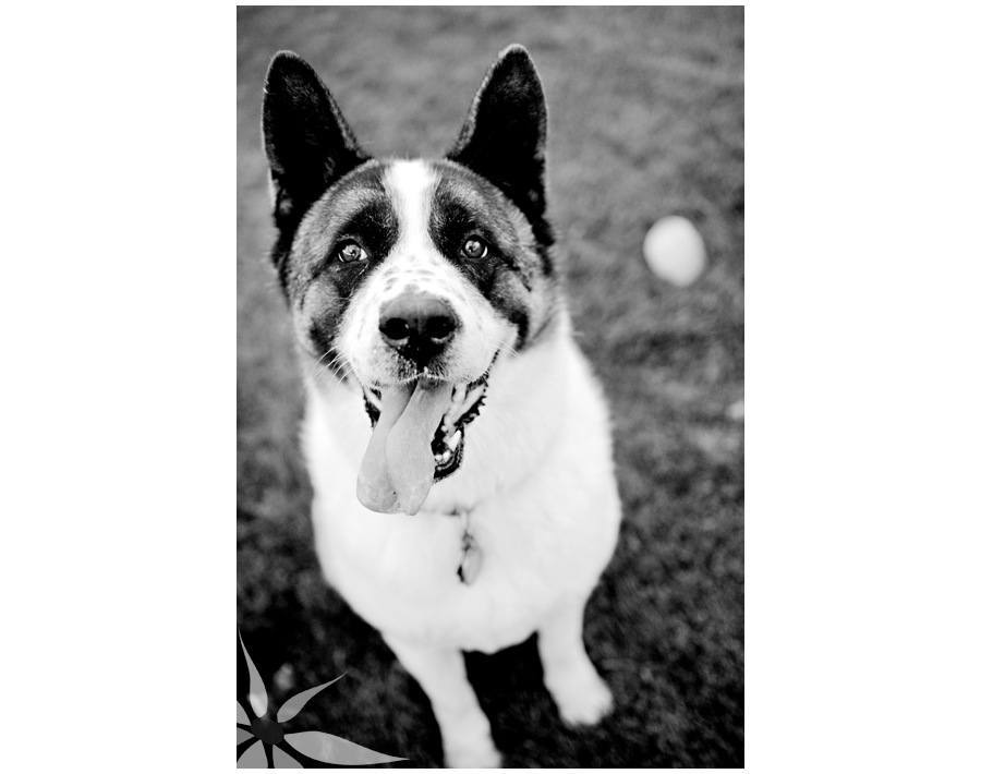 Denver_Dog_Photographer_0003