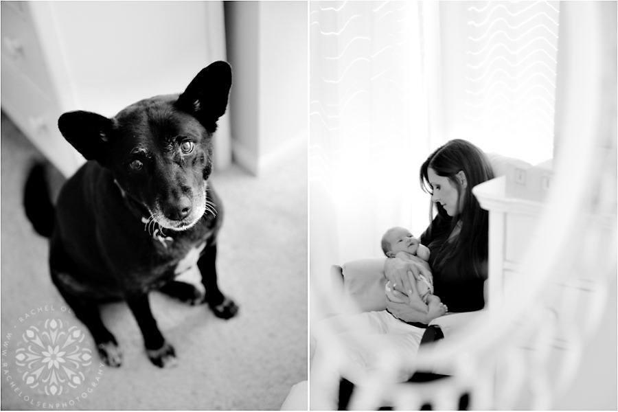 Newborn Photographer Fort Collins_0005