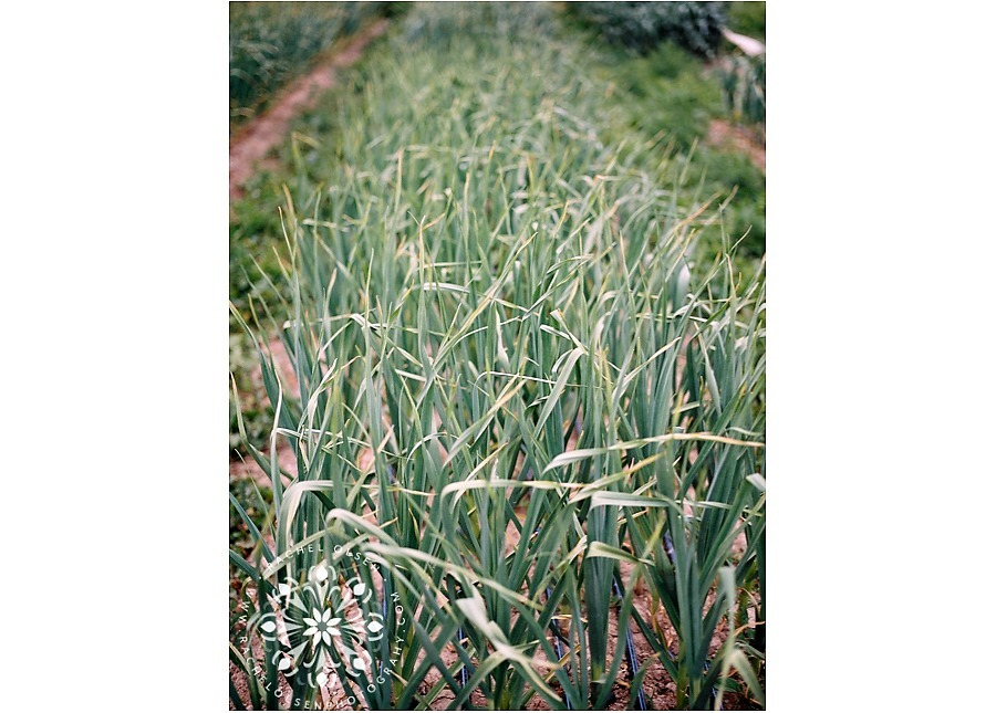 Meadow_Lark_Farm_Dinners_FILM_0015